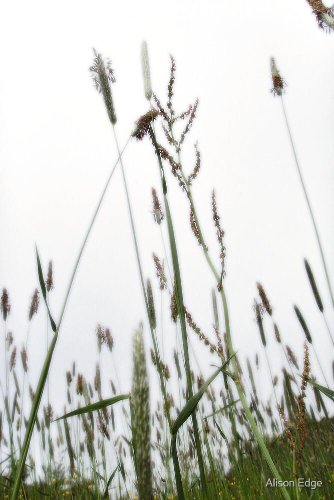 Meadow Flowers by Alison Edge
