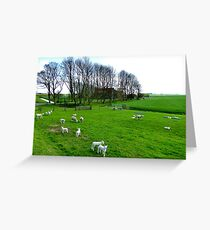 And there were lambs too ... Greeting Card