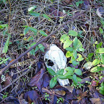 Deer Skull by HMorris