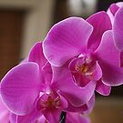 Easter Orchids by Gilberte