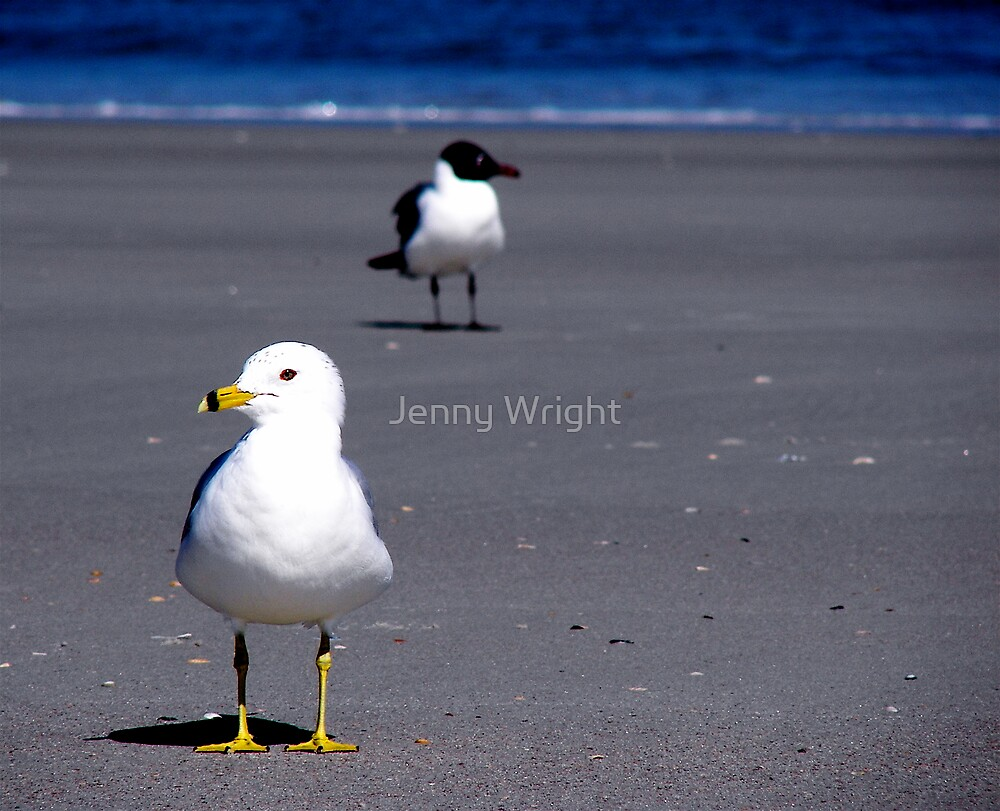 You Look This Way, I'll Look That Way by Jenny Wright