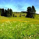 Alpe di Siusi by annalisa bianchetti