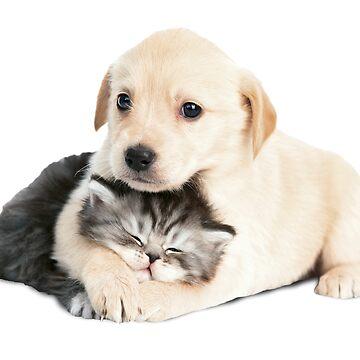 cachorros gato-perro de storebycaste