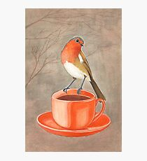 coffee loving robin bird Photographic Print