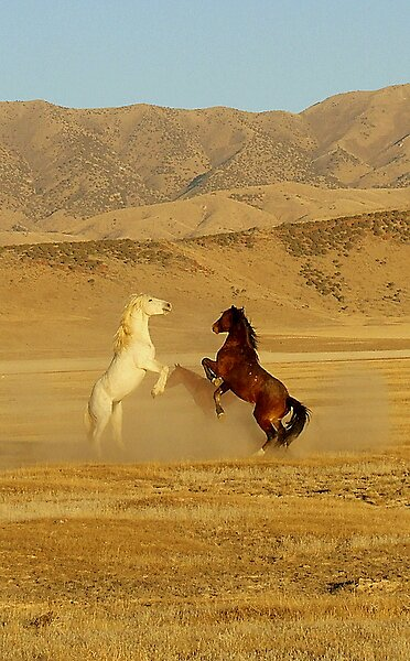Horse Fight!!! by UPSer