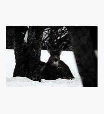 Winter Survival Photographic Print