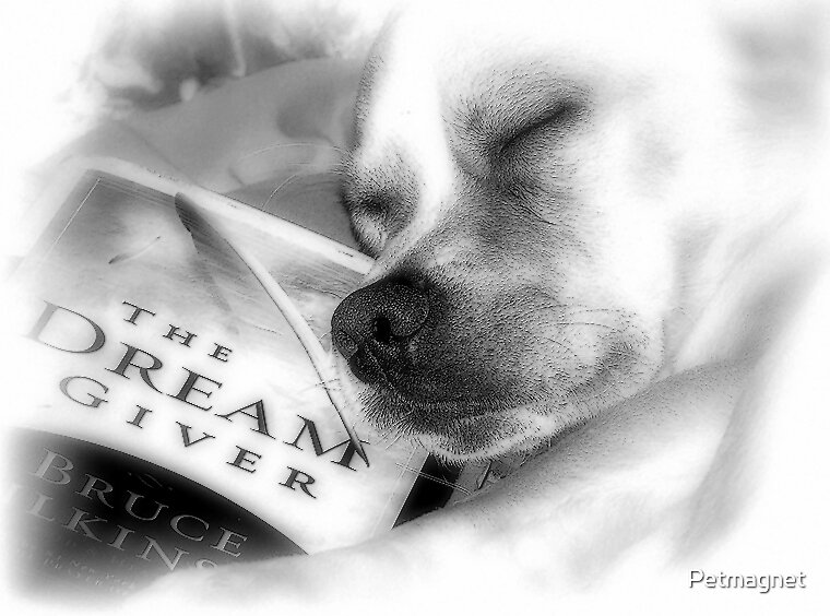 Sweet Dreams by Petmagnet