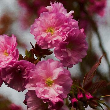 Pretty in pink by Violaman