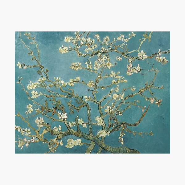 Almond Blossom - Vincent Van Gogh Photographic Print