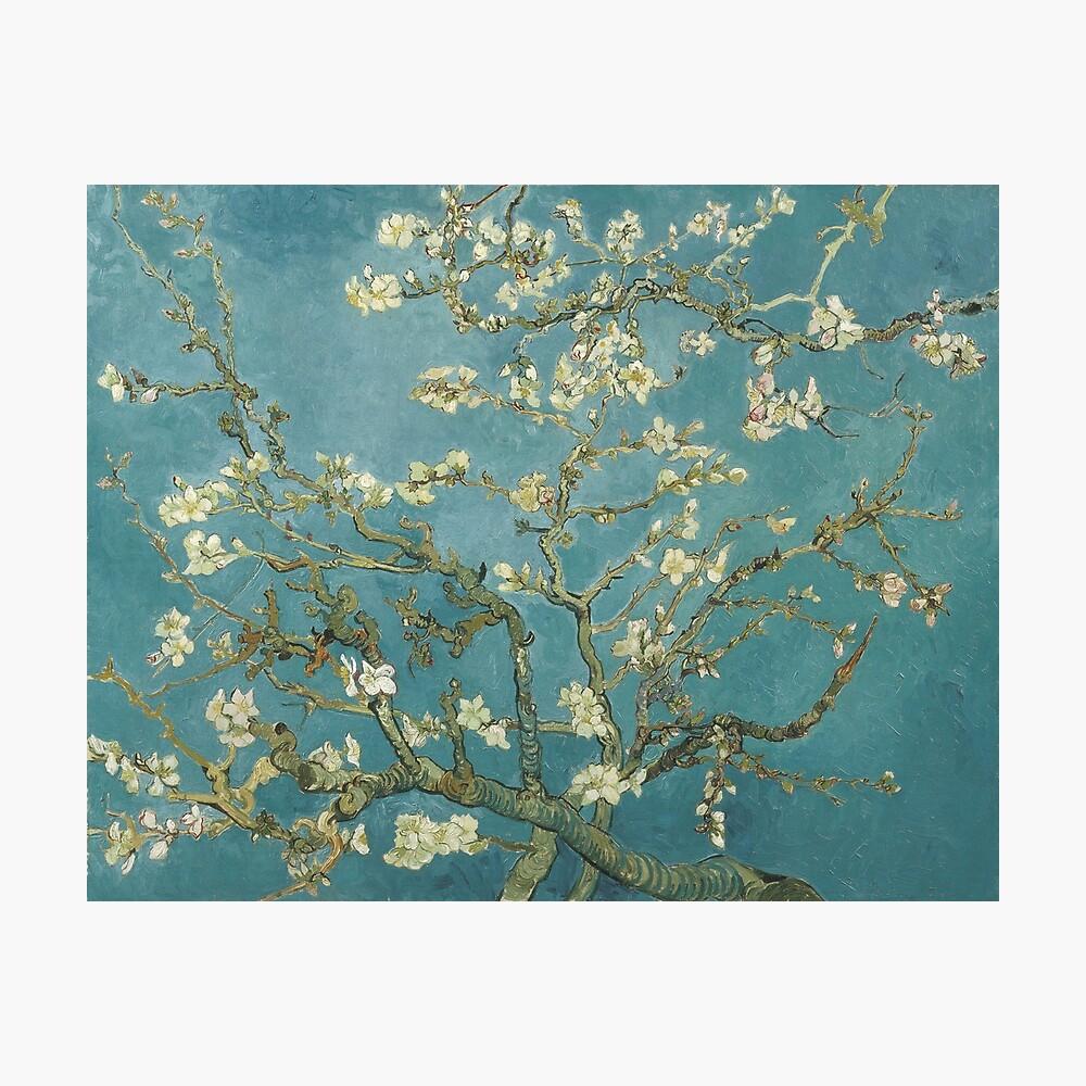 Almond Blossom - Vincent Van Gogh Lámina fotográfica