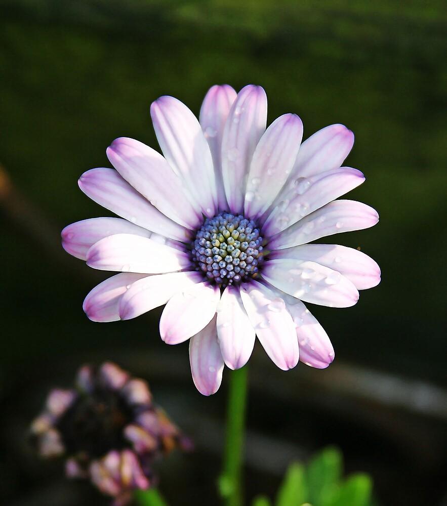 wow flower by SharonB