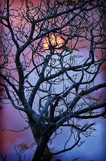 Suncatcher by Cloudlingpics