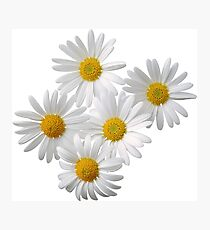 daisy flowers Photographic Print
