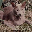 The Late, Great and much loved Jasper Cat. by AndyReeve