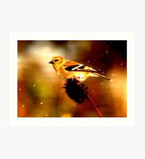 Songbird in Snowstorm Art Print
