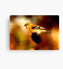 Songbird in Snowstorm Canvas Print
