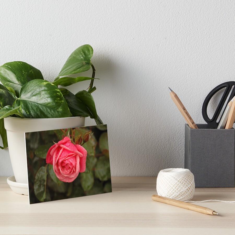 Rose Art Board Print