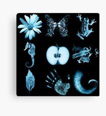 All nine glyphs of Fringe Canvas Print