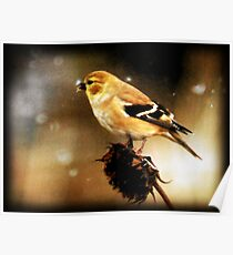American Goldfinch Watercolor Poster