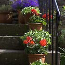 Pot plants and garden steps by MagsArt