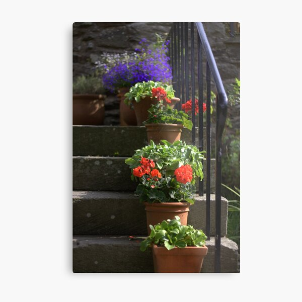 Pot plants and garden steps Metal Print
