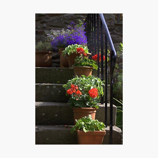 Pot plants and garden steps Photographic Print