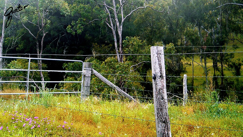 A View of Murphys Creek by Gunter Photography
