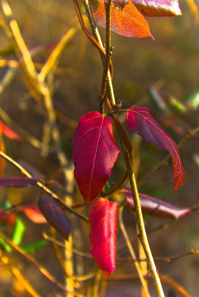 Colors Of A Virginia Winter by Rod  Adams