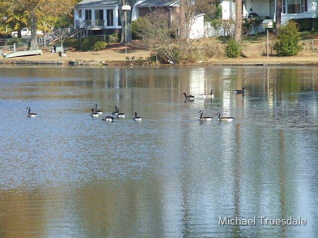 Canada geese by Michael Truesdale