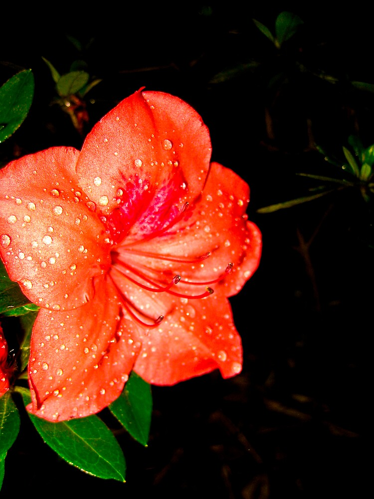 Botanical gardens flower by Michelle Williams