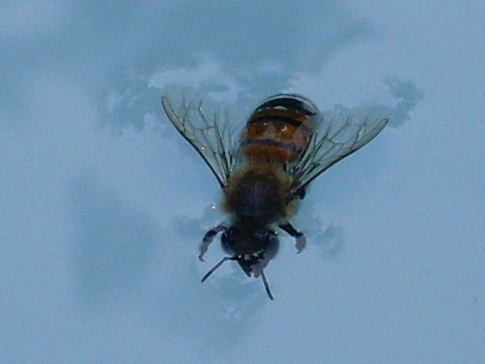 bee by oscar
