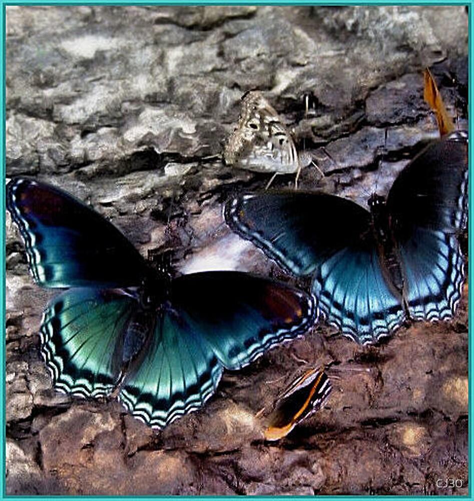 Beautiful Butterflies by CJ30