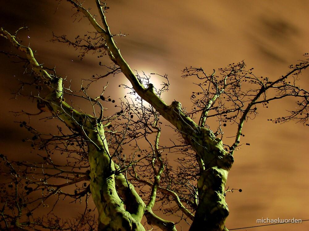 Moonlight by michaelworden
