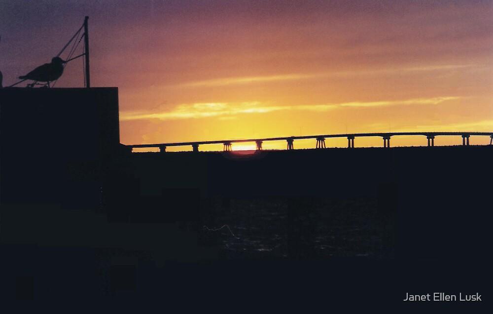 Black Bird's Sunset by Janet Ellen Lusk