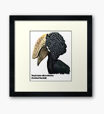 Crested Hornbill Bird Handsome Bill and Feathers Framed Print