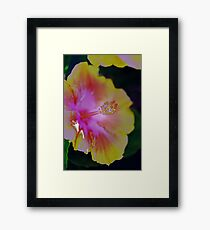 Colours Merge - Hibiscus Framed Print