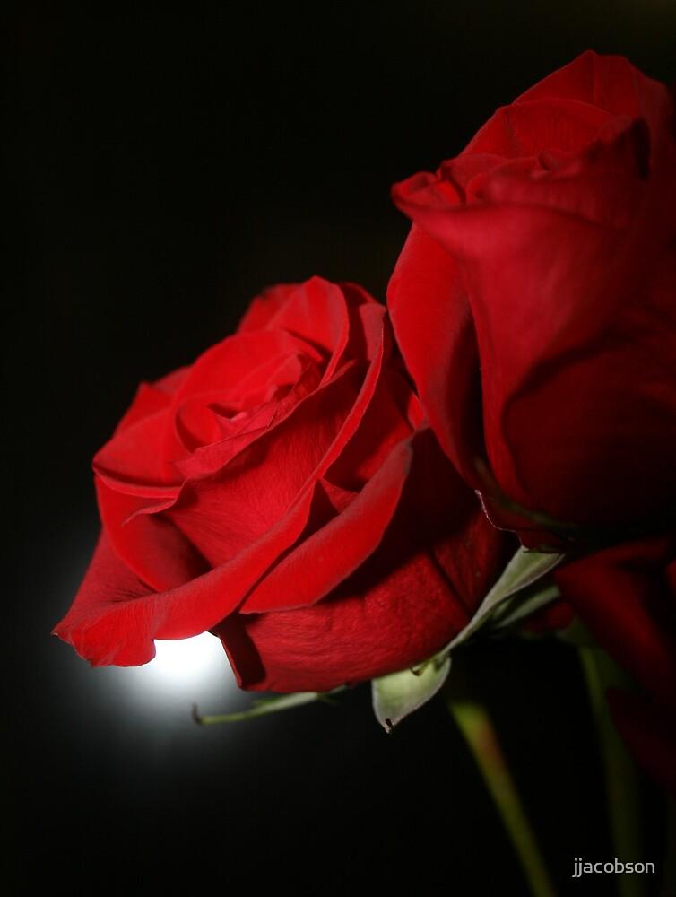 Rose Series by jjacobson