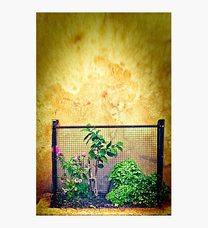 Caged Photographic Print