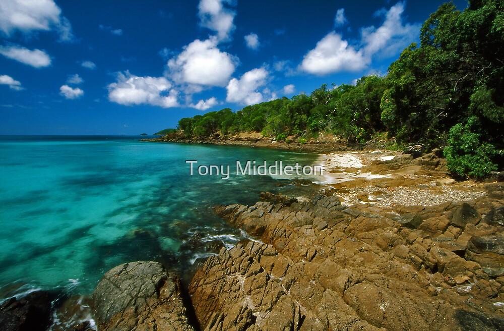 paradise by Tony Middleton