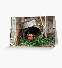 Ukrainian dog Greeting Card
