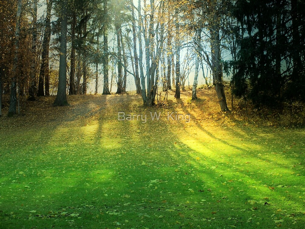 Forest Landscape In Uppsala Sweden by Barry W  King