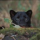 Black Panther Peaking over. by AlanandSandy