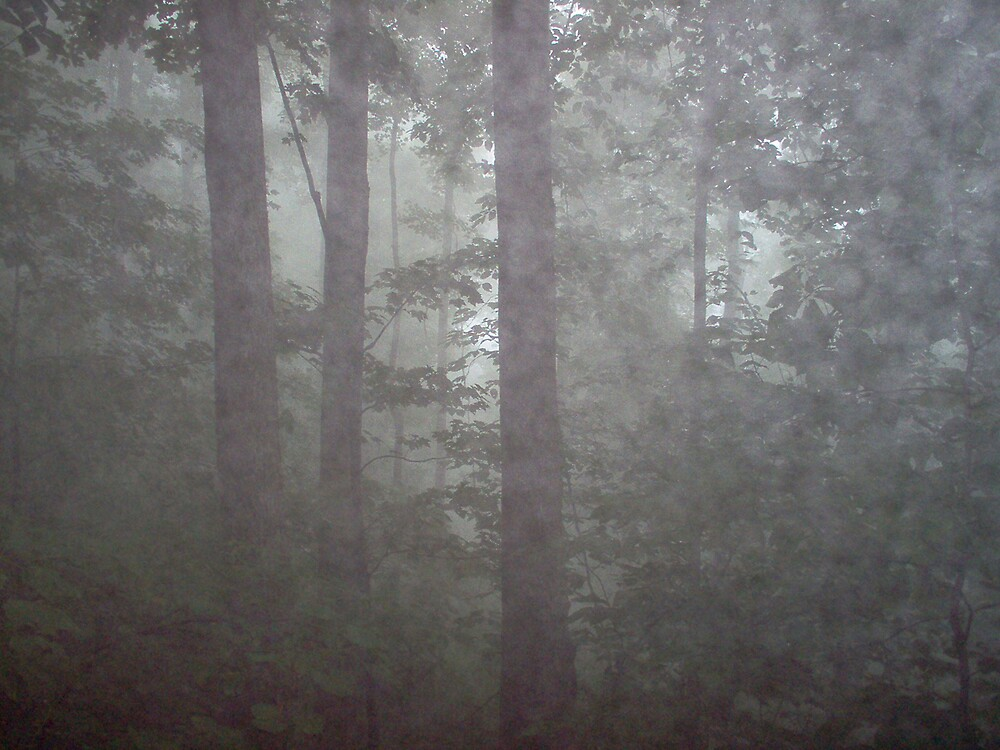 Foggy Forest                          by Allen Carr