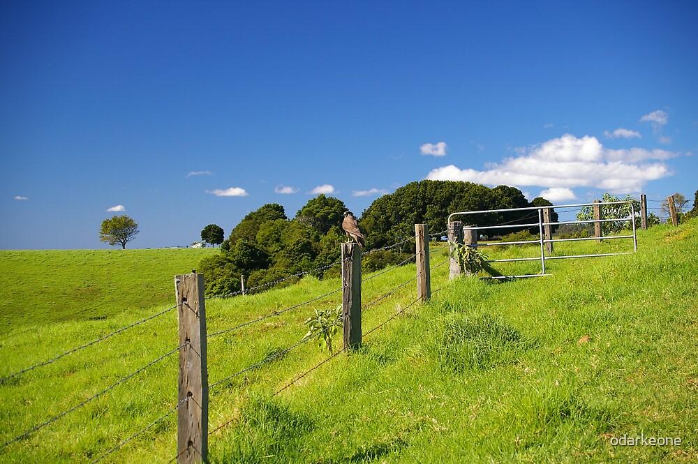 Hawk on a fence by odarkeone