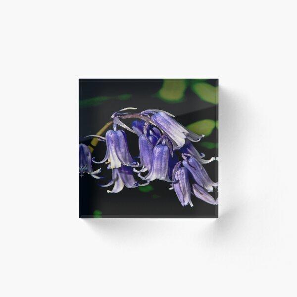 Bluebells Acrylic Block