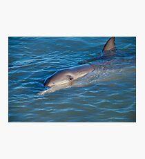 Dolphins Of Monkey Mia Photographic Print