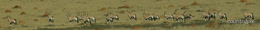 Gemsbok / Oryx by countrypix