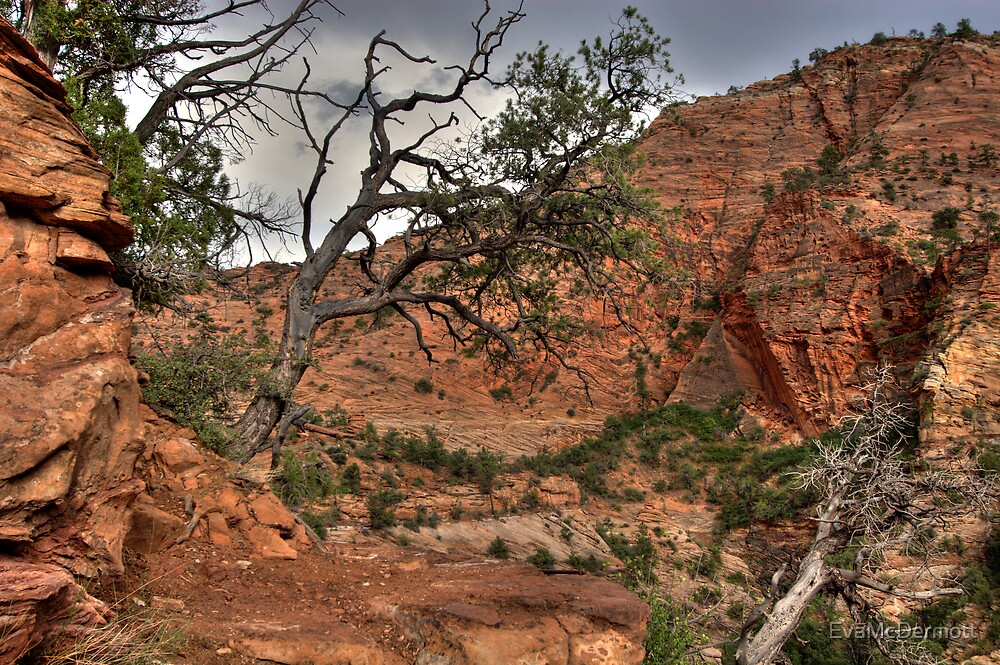 Trees at Zion by EvaMcDermott