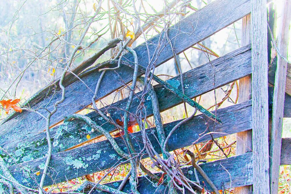 Broken Gate by Rod  Adams