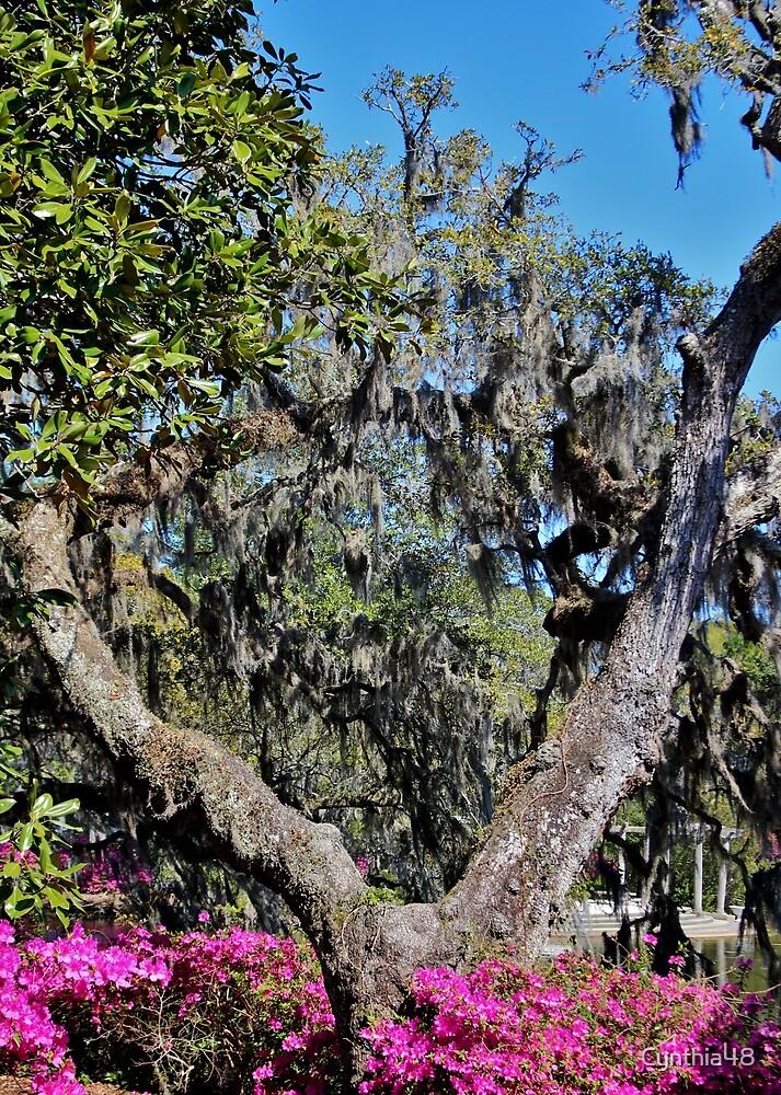 Split Tree Beauty by Cynthia48